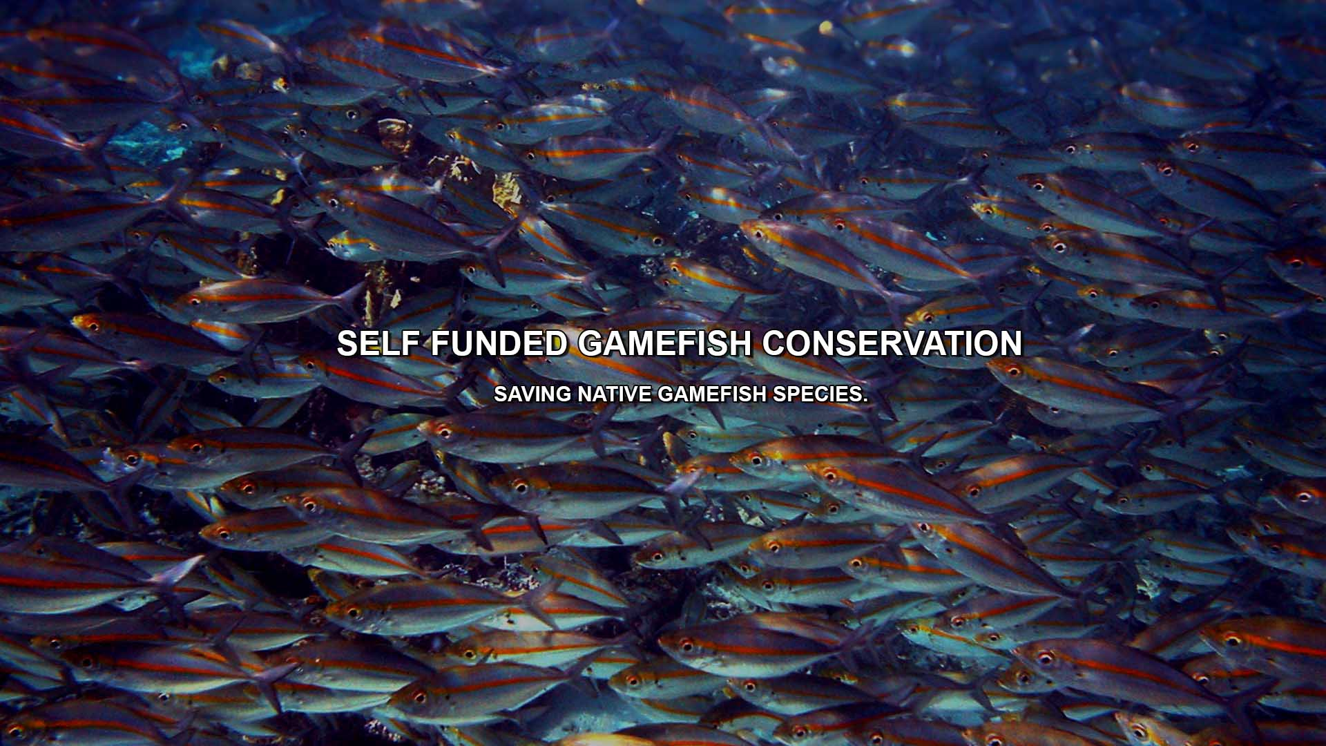 Fish Conservation